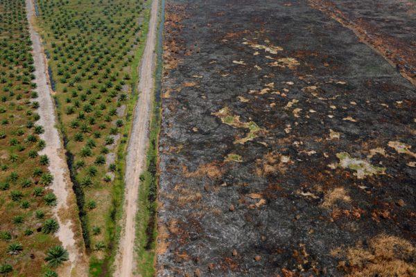 Площадь горящих пожаров в Индонезии «больше, чем в Нидерландах»