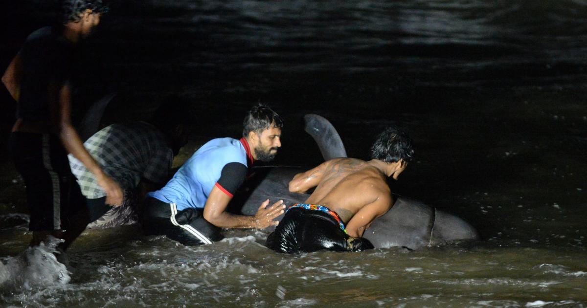 Спасатели участвуют в гонке за китами в крупнейшей пристани Шри-Ланки