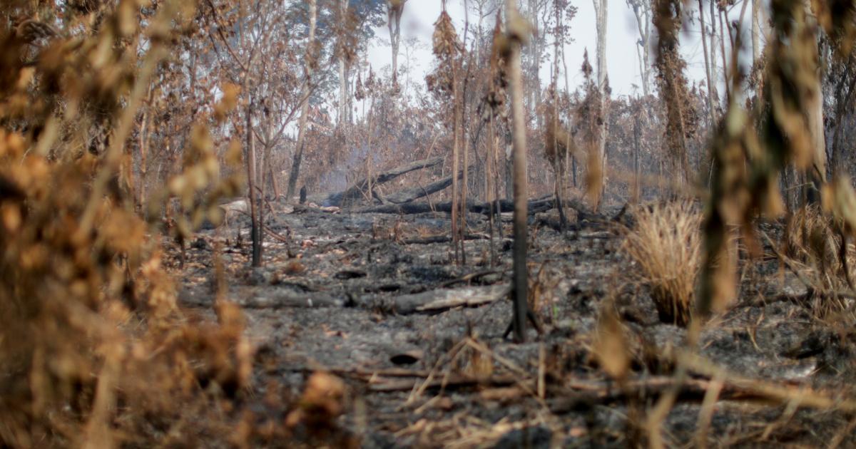 Пожары в тропических лесах Амазонки в Бразилии подскочили в октябре