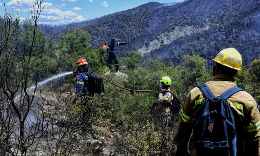 Пожарные ликвидируют пожар в районе соснового леса недалеко от Лутраки.