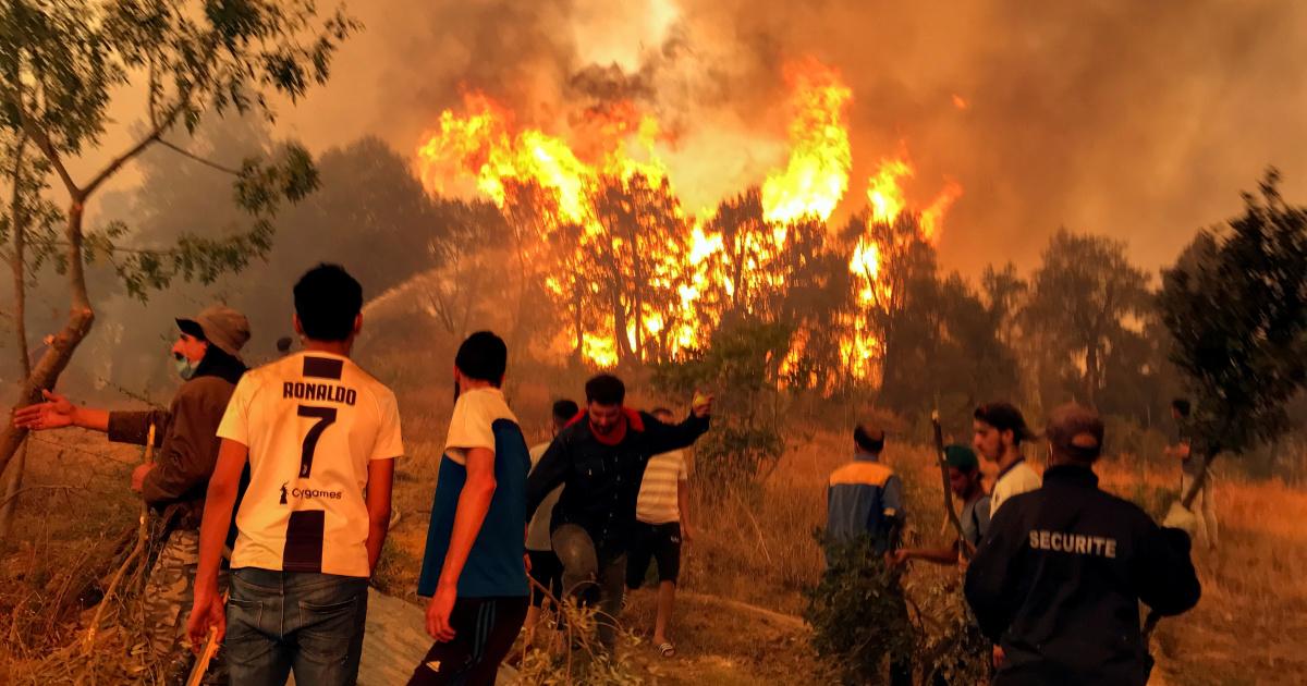 Почему лесные пожары унесли столько жизней в Алжире?