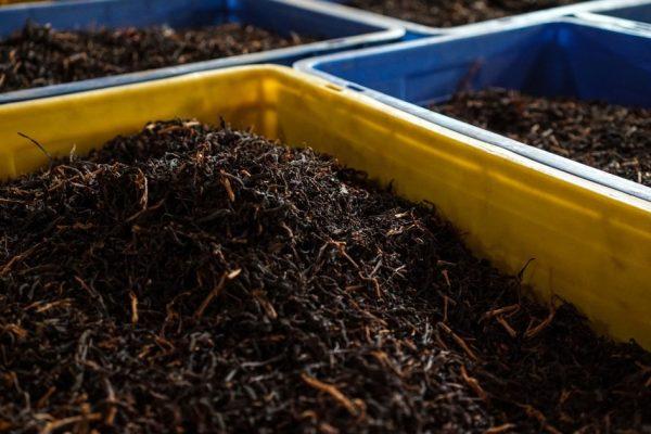 Революция в области экологически чистых продуктов питания в Шри-Ланке угрожает ее чайной промышленности